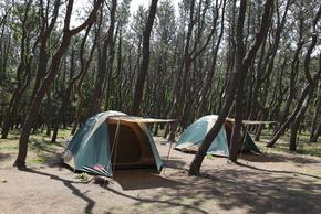 茅ヶ崎市柳島キャンプ場キャンプサイト